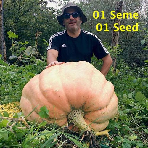 Pumpkin Atlantic Giant Martini - 01 Seed