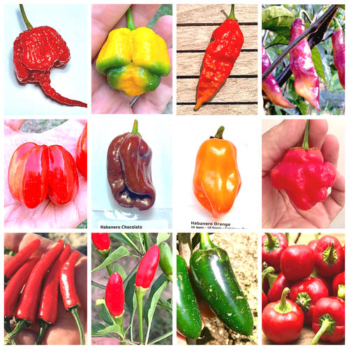 120 Seeds of the 12 most Classic and Hot Chillies - Classic Collection