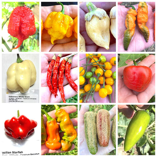 120 Seeds of the 12 Tasty and Weird Chili Peppers - Fantasy Collection